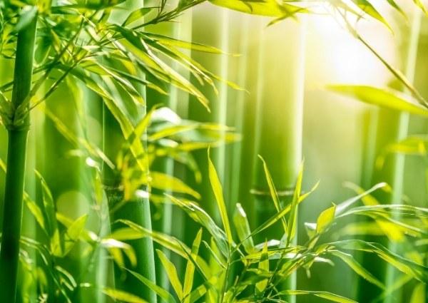 bambou une matière écoresponsable